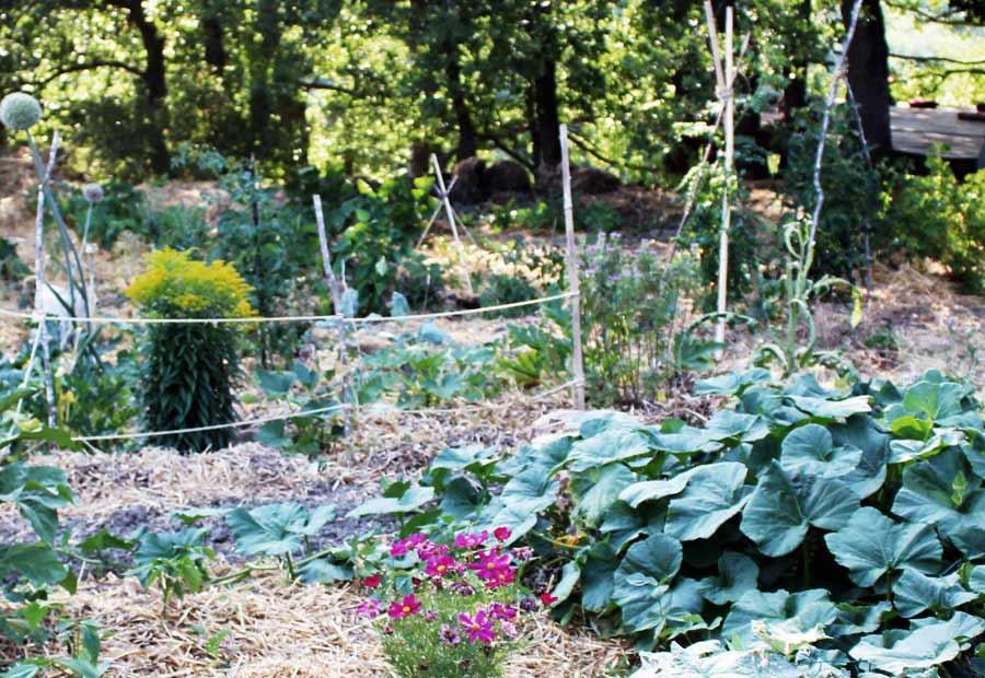garden-veg