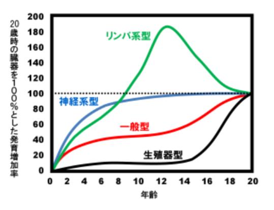 スキャモン発育曲線.PNG