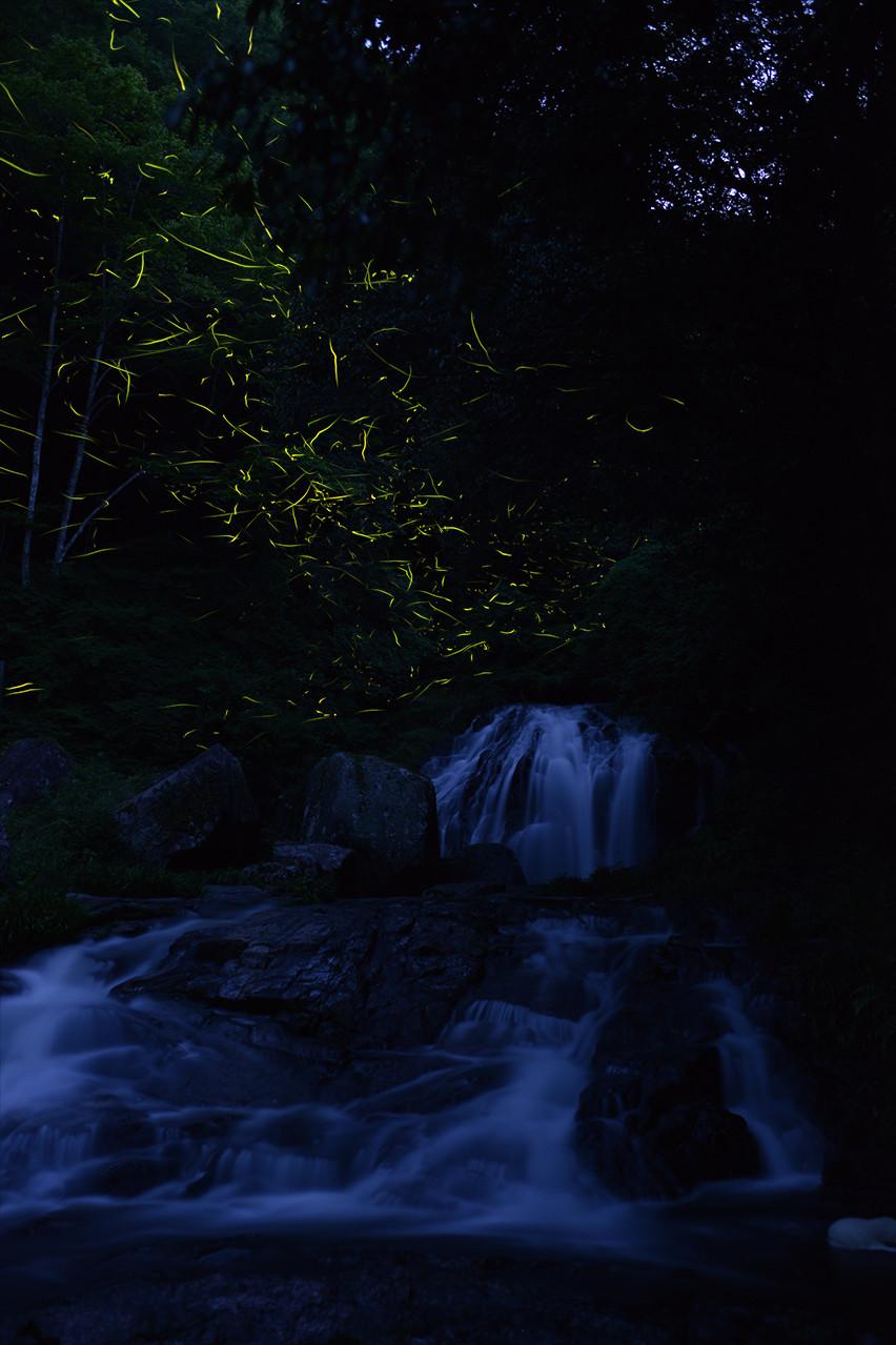 Красивые фотографии золотых светлячков