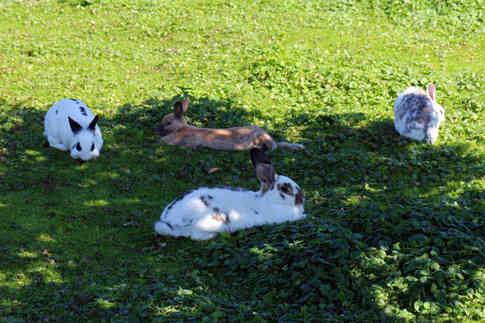Фотография кроликов на траве