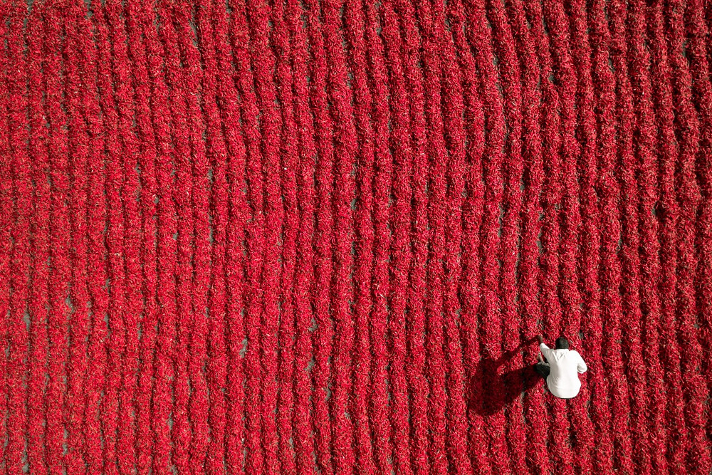 Red Chili Farmer, Guntur, India