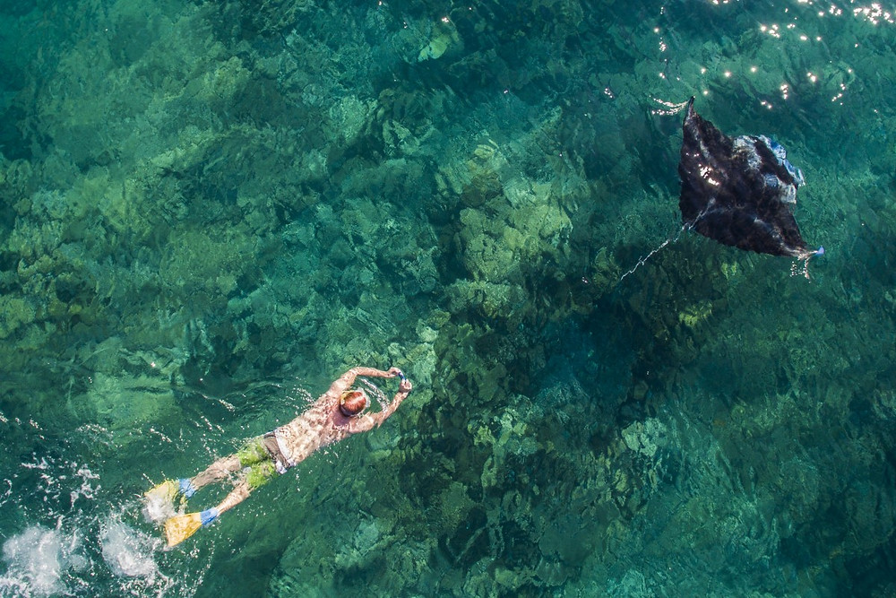 A snorkeller follows a Manta Ray, Yasawa Islands, Fiji