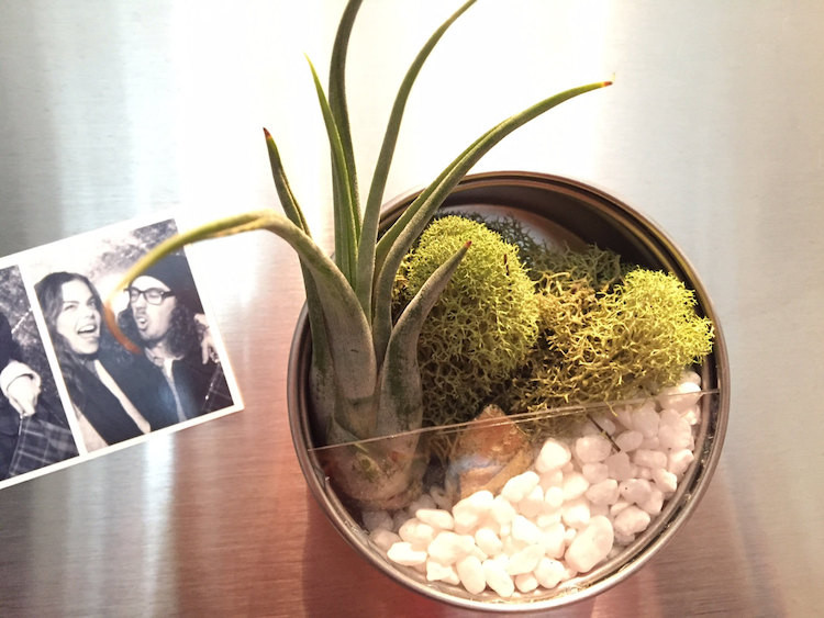 Air Plant Magnet Planter