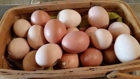 Фотография куриных яиц в корзинке