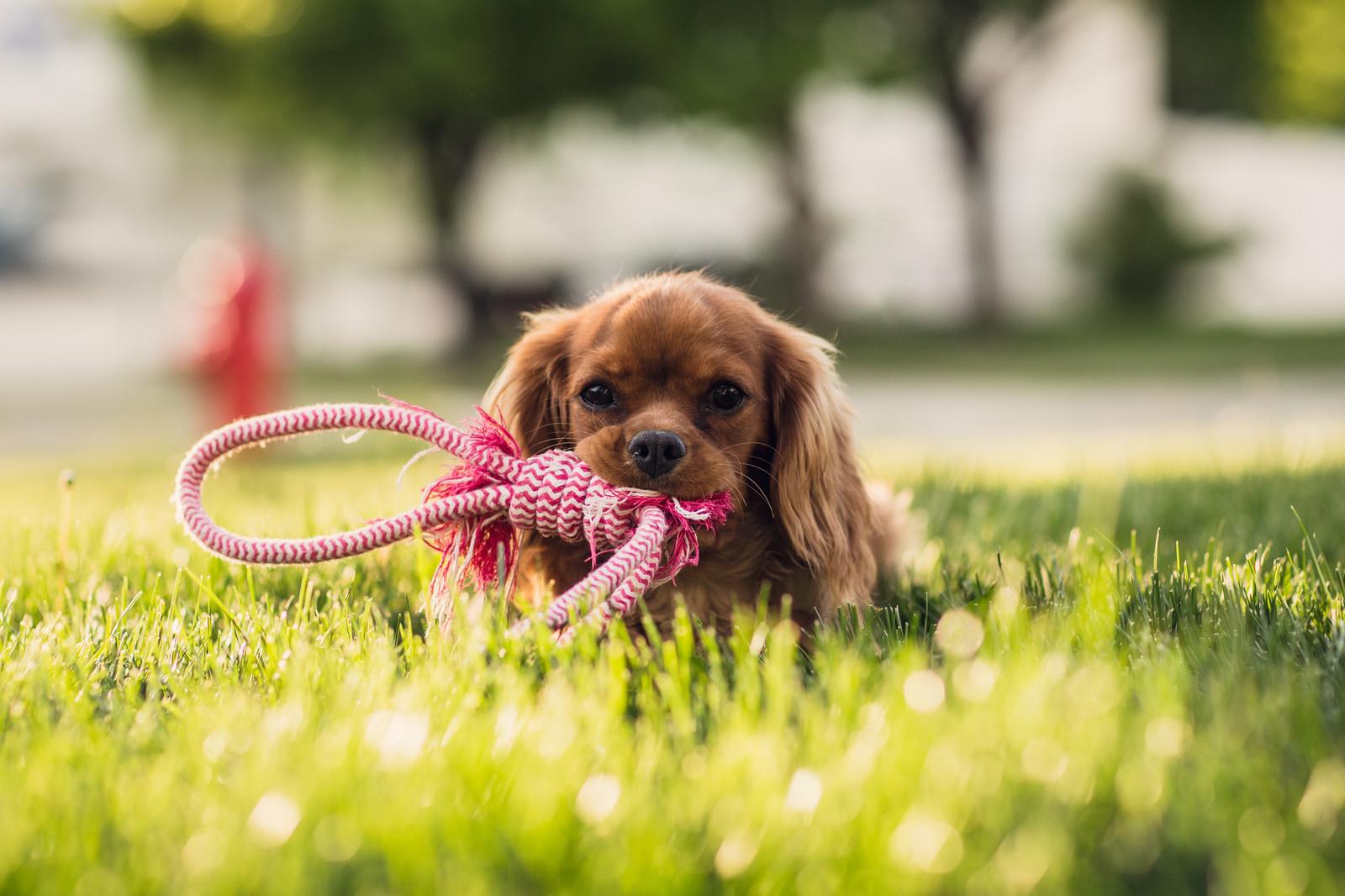 Картинка самой милой собаки
