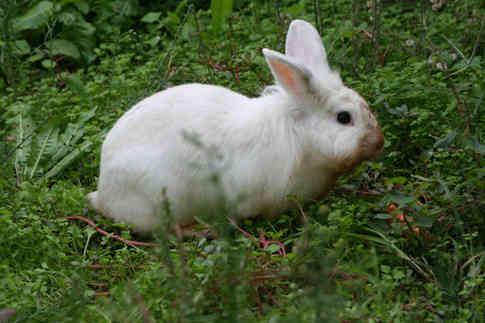 Фото белого кролика на траве