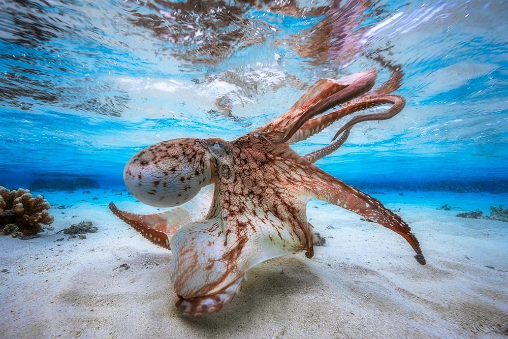 Габриэль Баратью - фото «Танцующий осьминог»