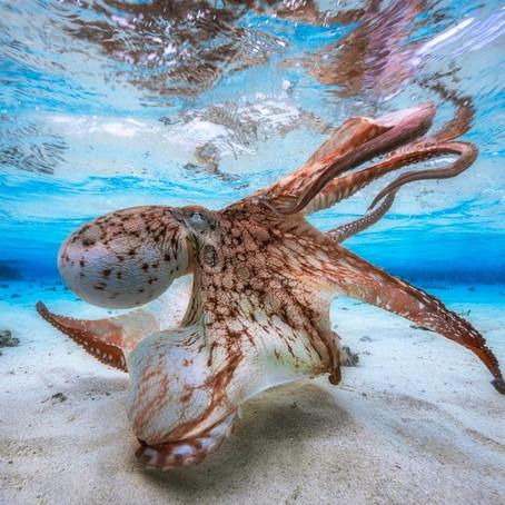 Победитель фотоконкурса Underwater Photographer of the Year 2017