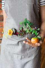 The Fat Snook veggies in apron.jpg