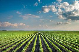 Smart Farm.jpg