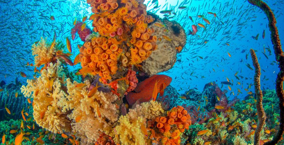 discover pristine coral reefs