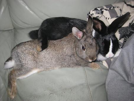 DORA & MARLIN Adopted 2011