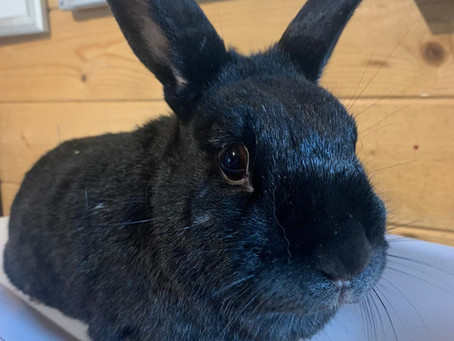 *Hoarding bunny fundraiser!*