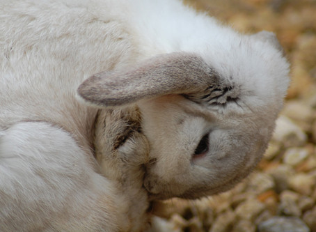 BUNNY SPA PACKAGES