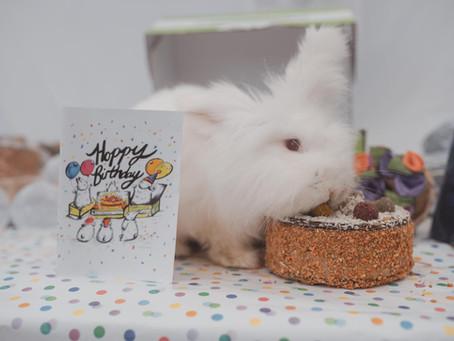 It's Pixie's 12th Birthday Bash!