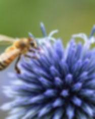 abeille50.jpg