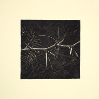 Mesquite Thorns