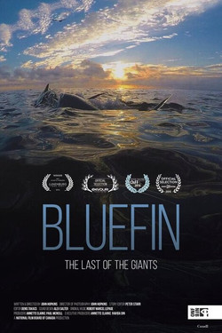Bluefin: The Last of the Giants