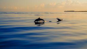 Spiš kot delfini?