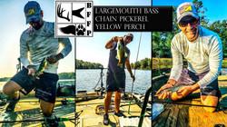 Bass, Pickerel, & Perch