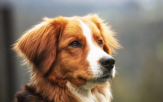 Dog brown.jpg
