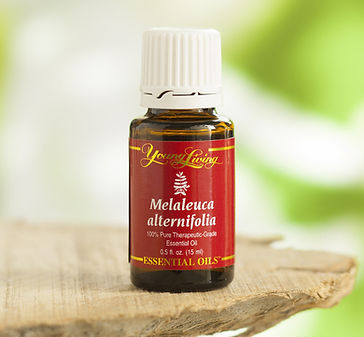 Tea tree Teafa illóolaj Young Living