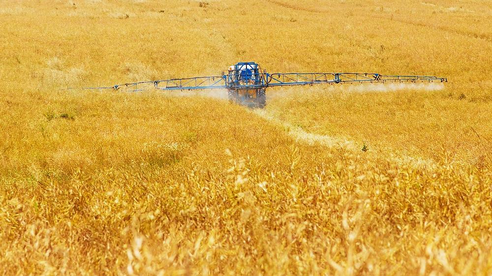 A búza terméshéjában (korpa) felhalmozódnak a rovarirtószerek és gombaölő szerek maradványai, amelyek emésztőrendszeri betegségekhez vezetnek
