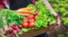 Vegetables_Small-900x500.jpg
