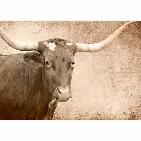 Mint Texas Longhorn