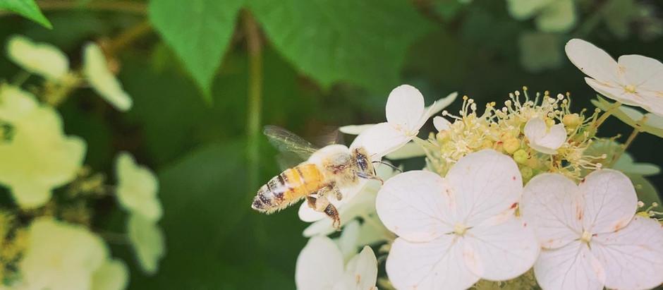 Diet and Honeybee Gene Expression