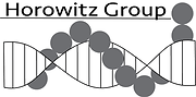 HorowitzGroup_Logo.png