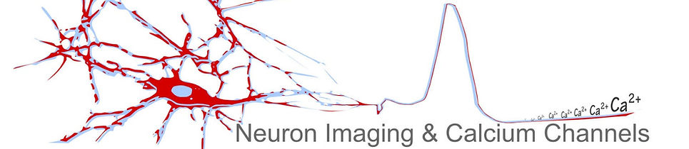 research team  voltage calcium imaging neuron channels marco canepari