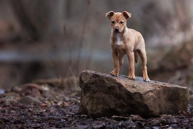 Katja-Reinl-Photography-Mischling-Welpe-steht-auf-einem-Stein