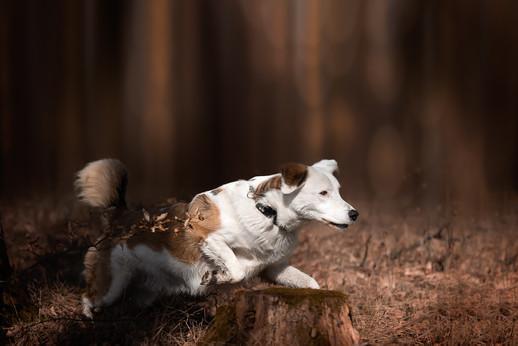 Katja-Reinl-Photography-Mischling-Rüde-rennt-durch-den-Wald