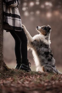 Katja-Reinl-Photography-Blue-merle-Australian-Shepherd-Hündin-sitzt-und-stellt-die-Vorderpfoten-liebevoll-auf-die-Beine-eines-Mädchens.