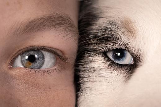 Katja-Reinl-Photography-Auge-eines-Hundes-neben-Auge-einer-Frau