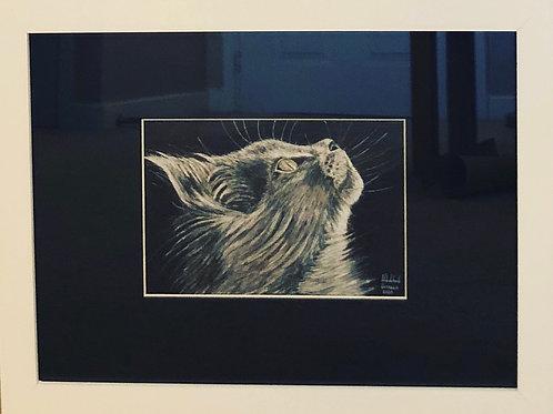 Monochrome Cat - Framed Original