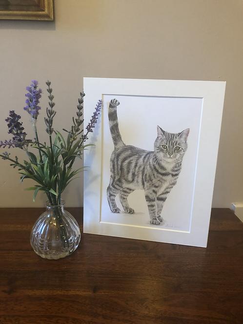"Tabby Cat  - 10""x 8"" Mounted Fine Art Print"
