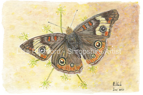 Butterfly - Mounted Print