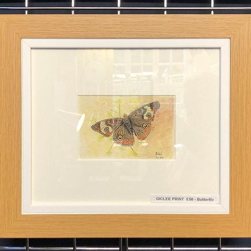 Butterfly - Framed Print