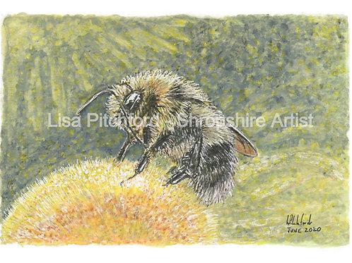 Bumble Bee - Mounted Print