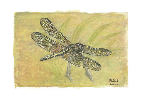 Dragonfly - Mounted Print