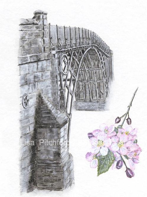 Ironbridge Blossom