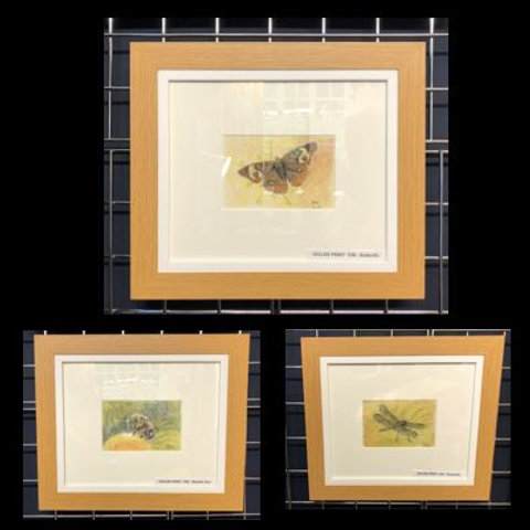 Set of 3 Framed  Insect Prints
