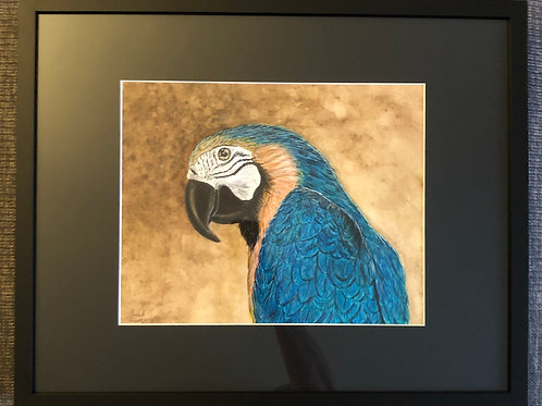 Beaks the Macaw - Framed Original
