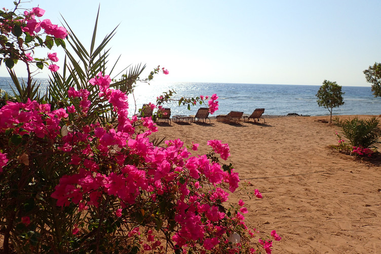 The beach with flowers and a place to sit and relax in front of the red sea