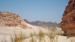 The desert of Sinai