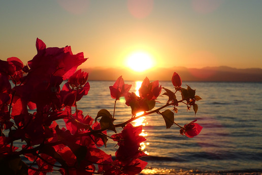 Sunrise with flowers and the red sea in between