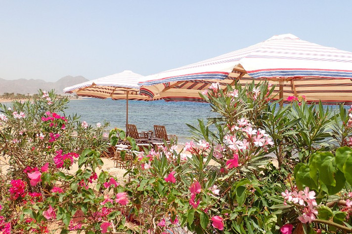 Beach garden at Bedouin Star beach