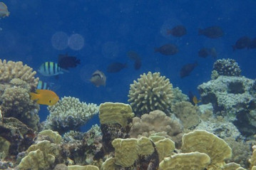Snorkelling between fishes and coral reef from the beach